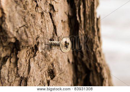 Screw In A Tree