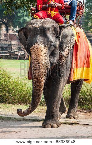 elephant Ride Around The Park In Ayutthaya