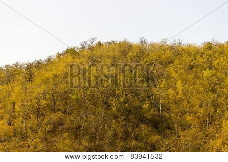 Thick dense forest on a hill captured in a summer afternoon