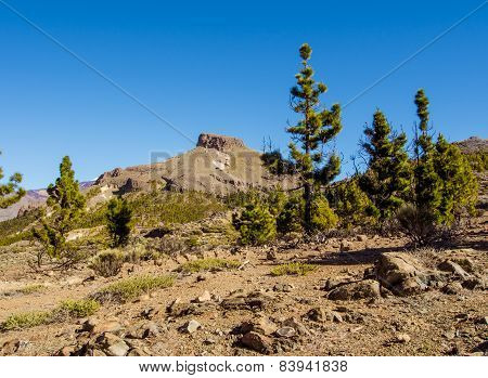 Teide National Park, Tenerife. Canary Islands, Spain