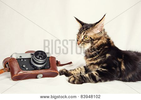 Kitten And Old Camera
