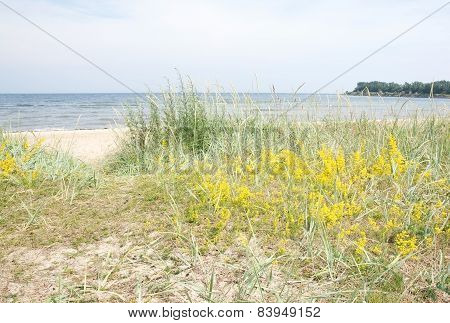 Sandy beach and vegetation