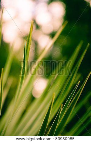 Blur grass background