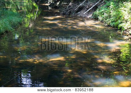 Colourful Small Pond With Sunbeam