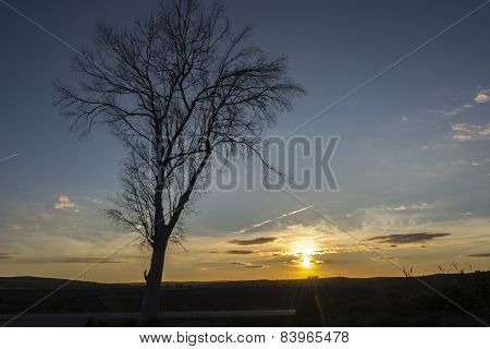 Silhouette Dry Tree On Background Of Sunset