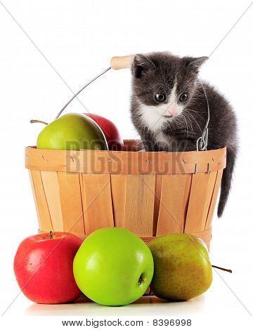 Harvest Kitty