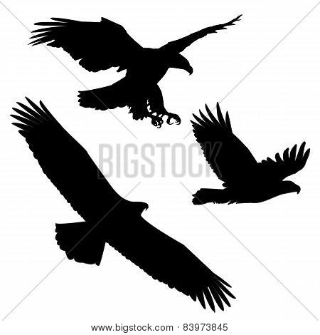 Set of black silhouette three eagles
