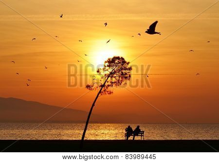 Sunset Tree People