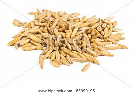 Grains Of Oats