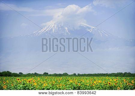 Ararat Mountain In Summer
