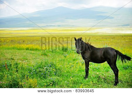 Horse On A Beautiful Plain