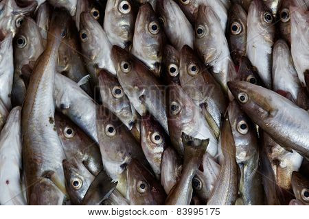 Fish abstraction