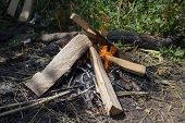 image of bonfire  - In Nature burning bonfire wood for barbecue with meat - JPG