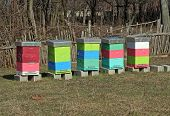 image of bee-hive  - Bee hive on the field. Bee hive boxes.