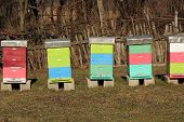 picture of bee-hive  - Bee Hive boxes - JPG