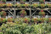 pic of wooden basket  - Flowering hanging baskets on old wooden rustic structure - JPG