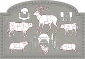 picture of deer meat  - Vector illustration of Diagram Guide for Cutting Meat in Vintage Style - JPG