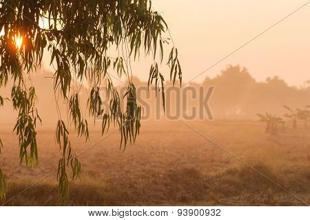 Sunrise And Leaves