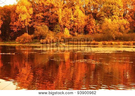 Autumn On Lake. Yellow Trees On Banks Of Pond With Ducks