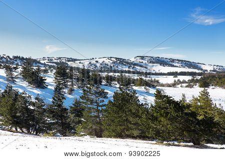 Forest On The Top Of Mountain Ai-petri, Yalta Municipality, Crimea, Russia.