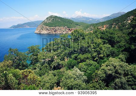 Pine Trees On The Southern Coast Of Turkey.