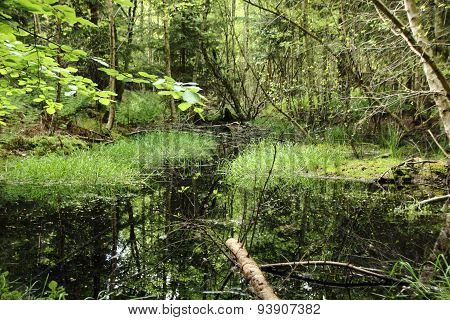Reflection In Fresh Lake Landscape In Untouched Deep Forest