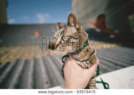 Tabby Cat Outdoors.