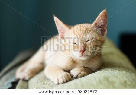 Orange Tabby Kitten Sleeping