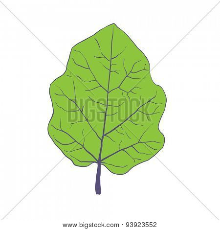 Green leaf of tree, isolated on white, vector illustration
