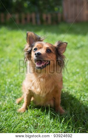 Small Crossbred Dog On The Grass