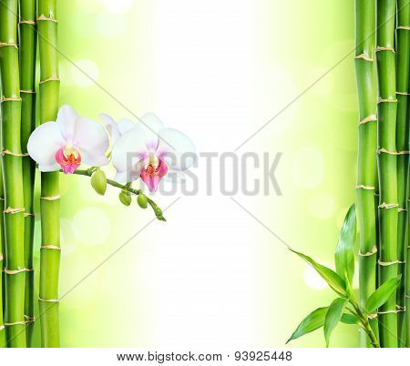 white orchid with bamboo - beauty and spa background