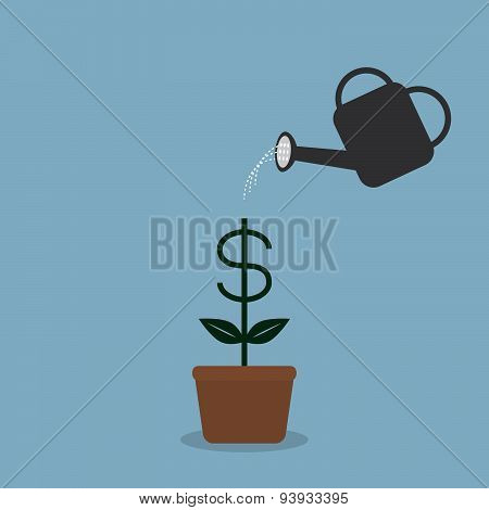 Watering Money Coint Plant