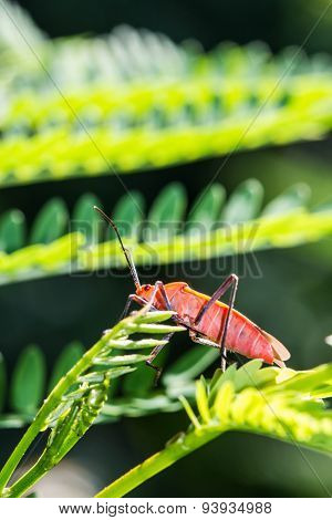 Red Bug On Green Leaf
