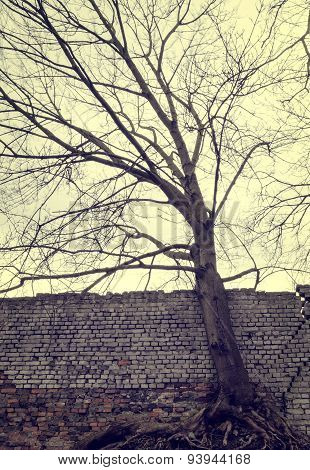 Leafless tree and a wall.