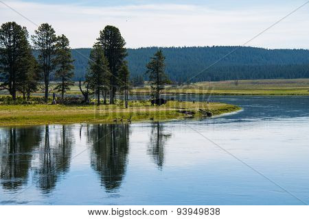 Lake with bison in Yellowstone National Park