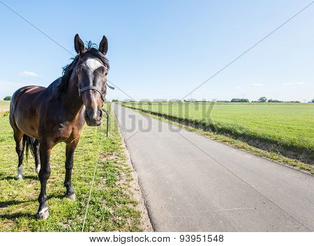 Dark Brown Horse Beside A Country Road