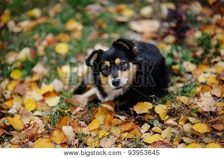 Dog Against The Backdrop Of Autumn Foliage