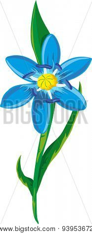 Illustration of a blue spring flower. Blue scilla flowers