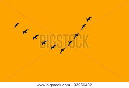 flock of birds v formation