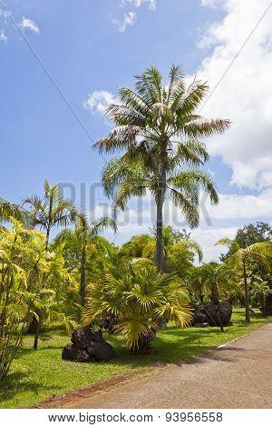 Tropical Botanical Garden In Funchal, Madeira Island, Portugal