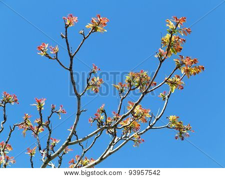 Authentic Landscape Tree Branch With Leaves Against The Sky, Backlit, As A Backdrop For The Staging