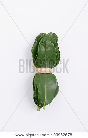 Bundle Of Fresh Kaffir Lime Leaf Isolated On White