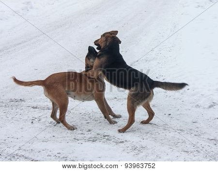 Two Stray Dogs Find Out The Relationship