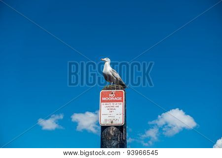 Seagull On Post - No Moorage