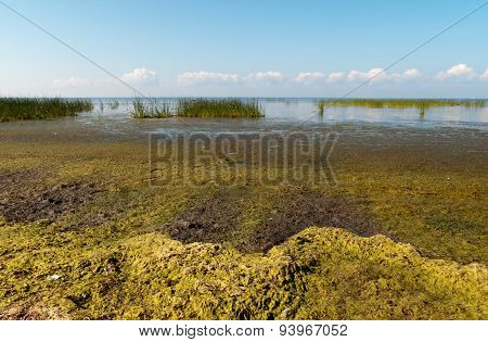Alga on Gulf of Finland