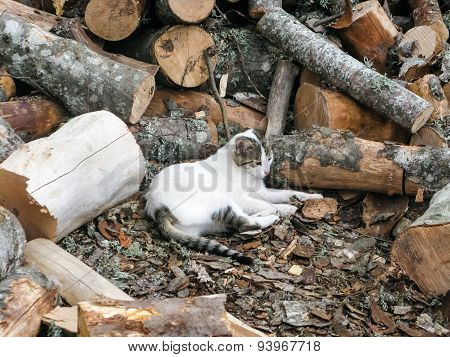 Cat Rest In Firewood