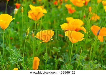 Flowers in the meadow.
