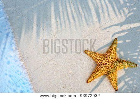 Art Shells Starfish On Sandy Beach  Background