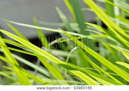 Neon Green Grass Blowing In Wind Background