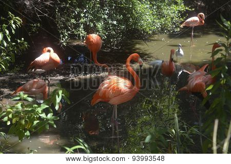 Flamingos in Jacksonville Zoo
